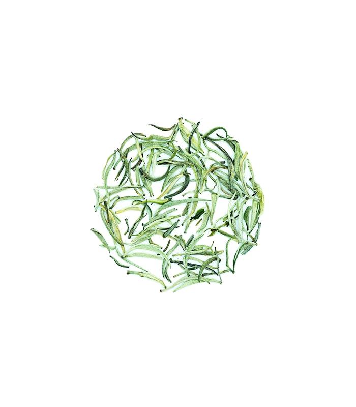 Silver-Needle-White-Tea